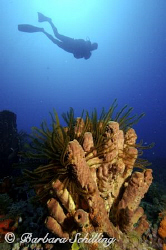 Surprisingly beautiful Sponges at this dive site in Marti... by Barbara Schilling 